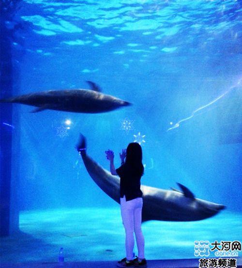 【游戏】东京极地海洋馆一个梦寐以求的海洋梦开封谭橙1攻略光图片