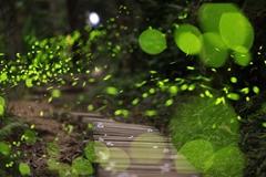 台湾森林变身童话世界