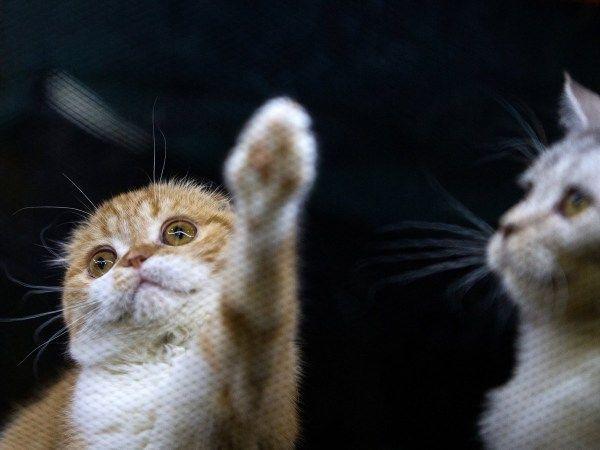 壁纸 动物 灵长目 猫 猫咪 小猫 桌面 600_450