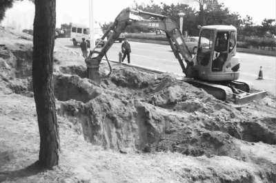 三月底,青岛东海路,园林工人在岩石体上种树图cfp