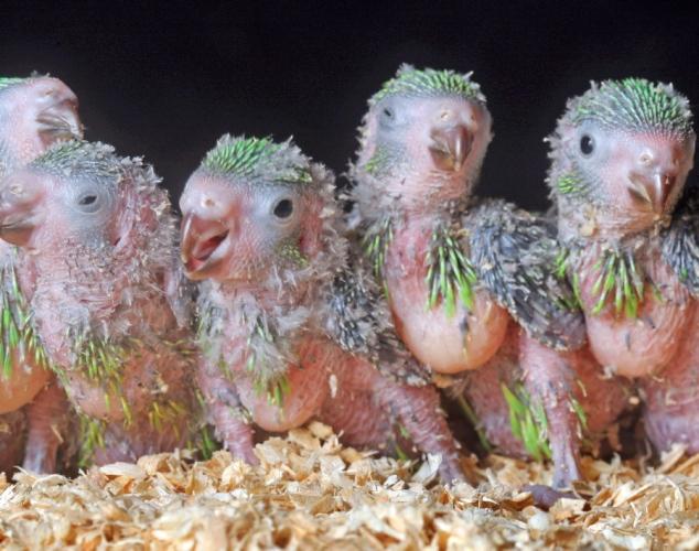 界上最丑陋20种动物 长鼻猴鼻子会发声图片