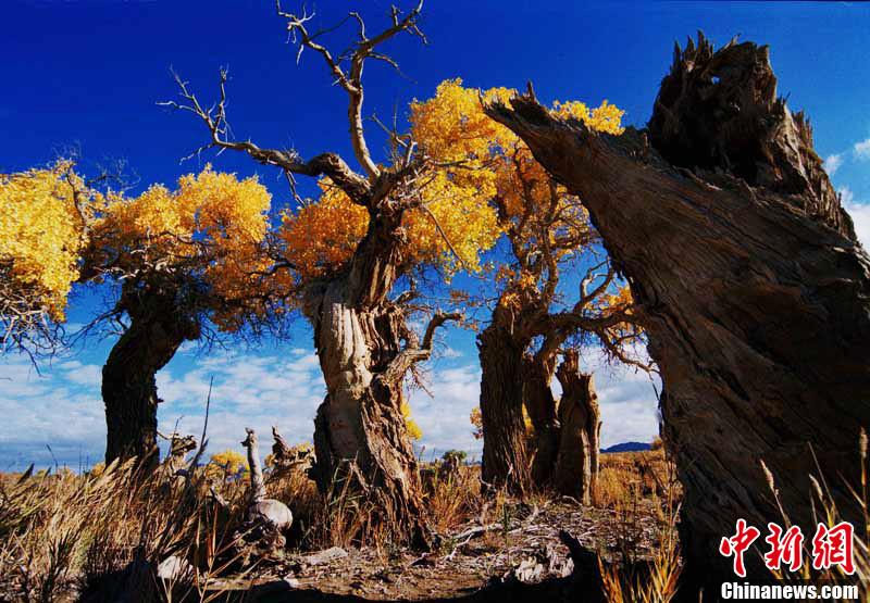 新疆木垒胡杨林层林尽染