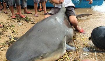 惠州渔民捕获500斤大鲨鱼