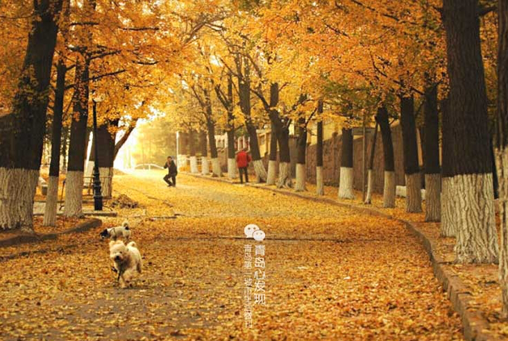 """条称之为""""青岛最美的地方""""丝毫不为过.位置在中山公园的南面,图片"""