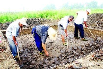 湖北发掘春秋部落居住遗址古人吃饭像吃西餐(图)