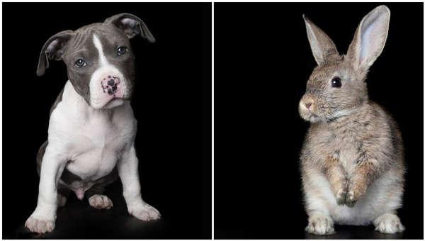 级可爱的动物照片