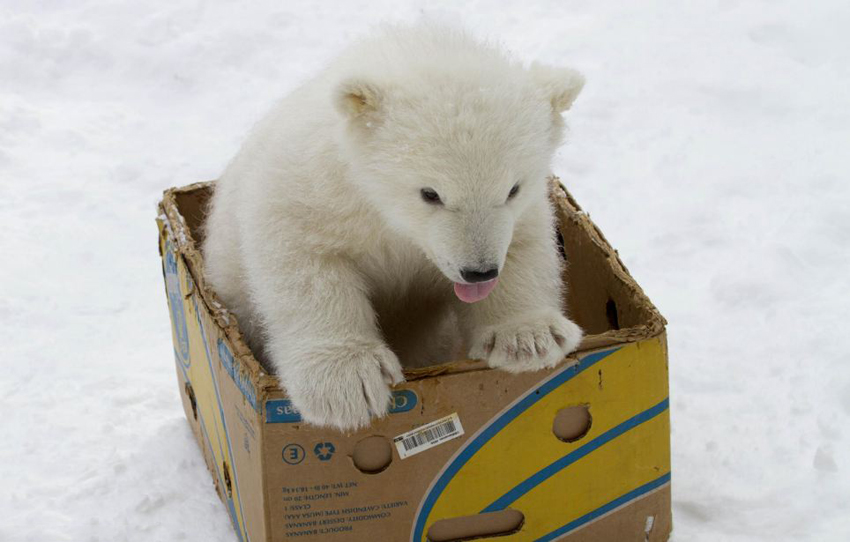 盘点全球最萌动物欢乐圣诞照
