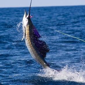 也搅动着海鱼的运动,四处觅食,所以涨潮和落潮是海钓的最佳时期.图片
