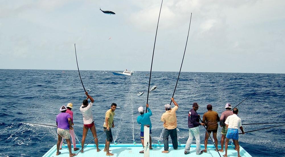 马尔代夫钓金枪石斑 海钓初学者的天堂