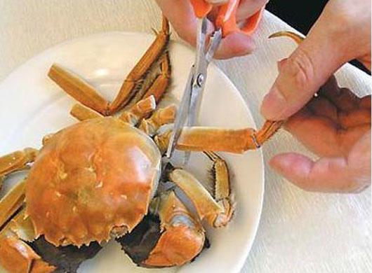 剪掉大闸蟹的八只脚,包括两只大钳,放凉后其中的肉会自动与蟹壳分开,很容易被捅出甚至是被吸出,因此要留待最后来吃。
