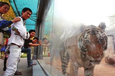 十一期间,银川中山公园动物园共接待游客5.