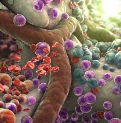 这些细胞发育成保护我们免遭感染的白细胞