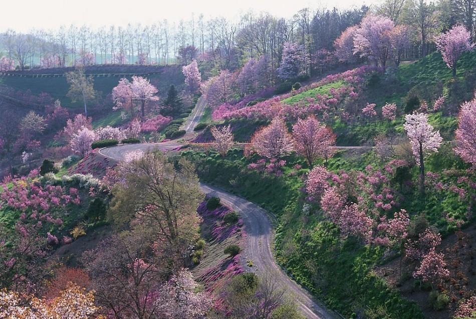 漫步世界上最美的林荫大道高清图片