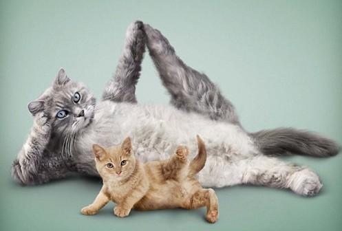 """超级萌宠秀 猫狗以瑜伽姿势""""出镜"""""""