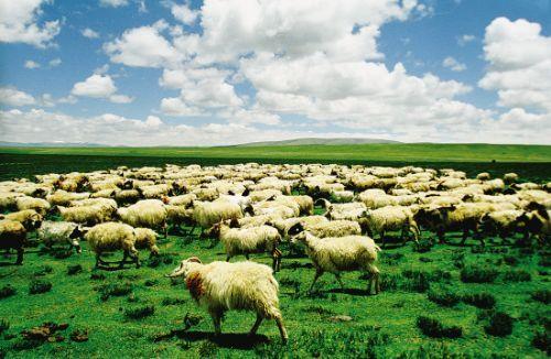 """""""世界农场动物福利协会中国总监周尊国在接受《中国科学报》记者采访"""
