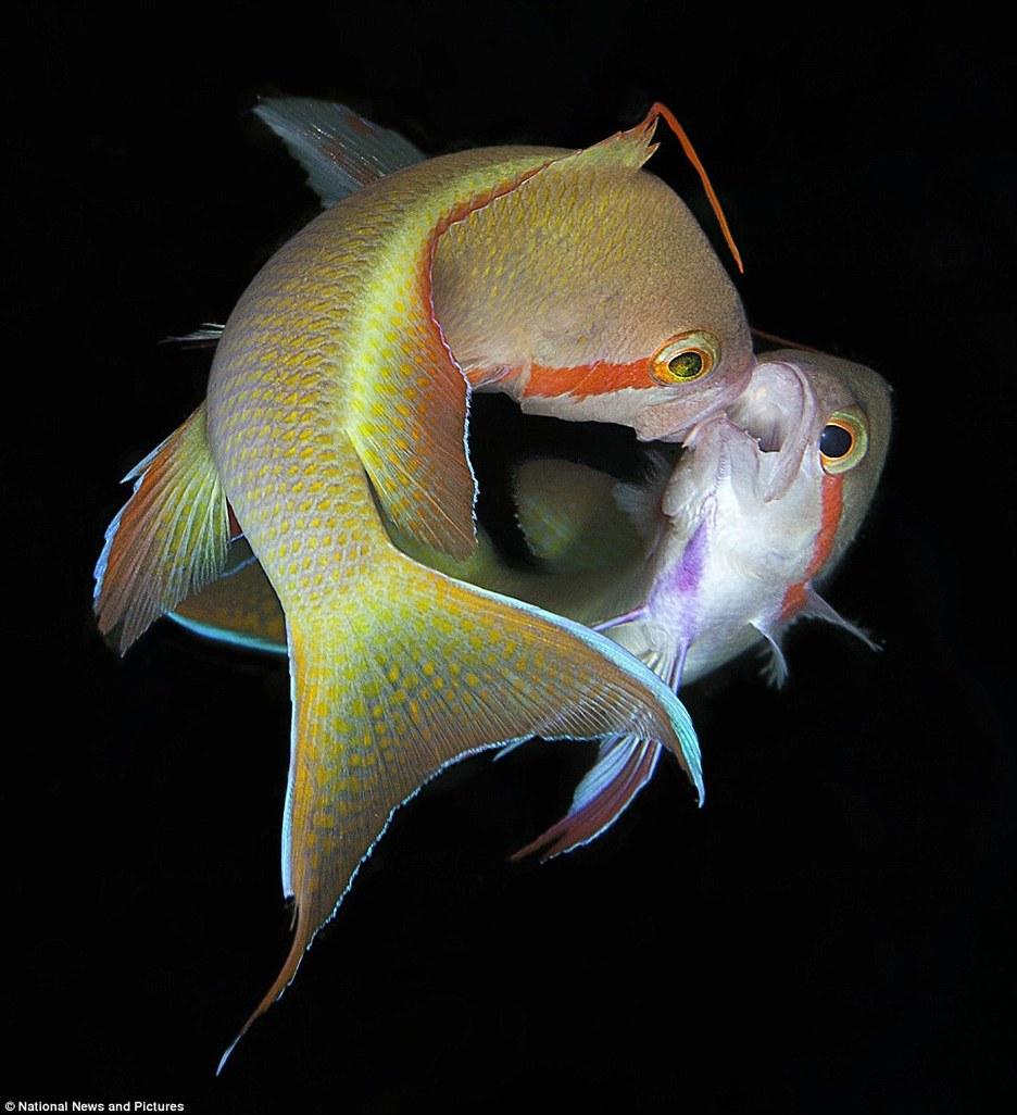 2012《水下摄影》获奖作品