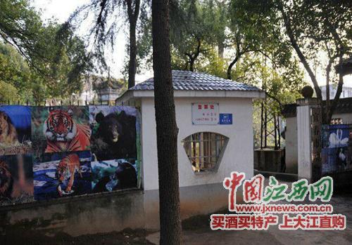 宜春春台公园动物园老虎在笼中失控 咬死清扫饲养员