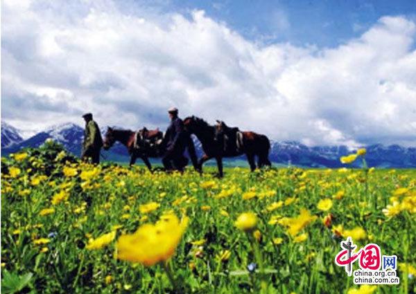 新疆那拉提空中草原 风吹草低见牛羊