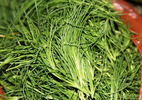 长寿草 长寿草的功效与作用 长寿草治疗什么