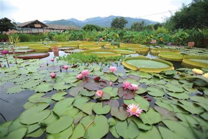 青岛:从中山公园小西湖到李沧睡莲世界