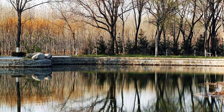 拥有原始环境的森林公园