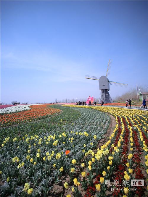 荷兰花海 风景街