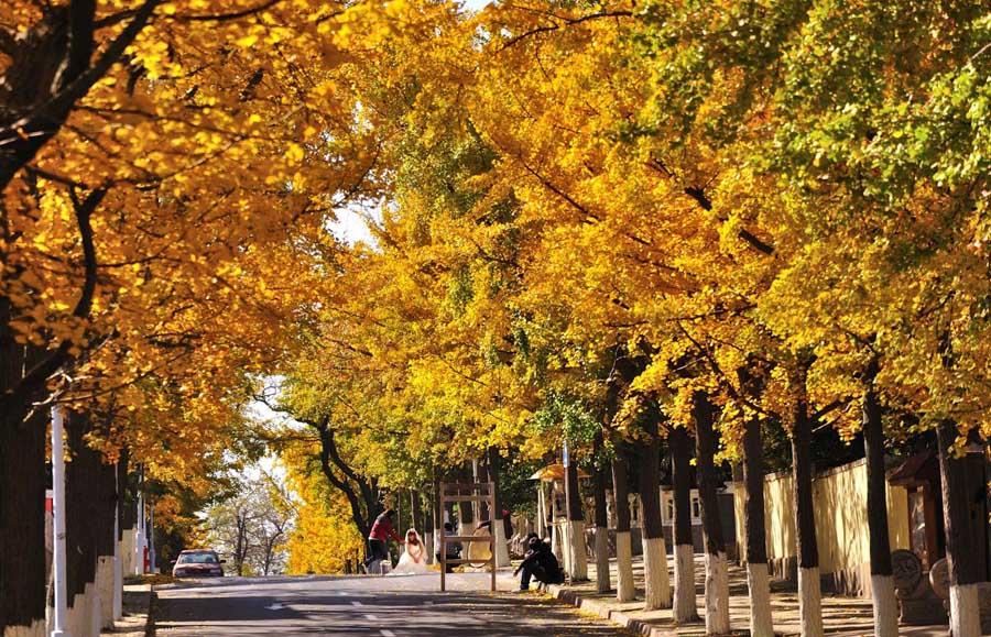 青岛八大关秋天的美色