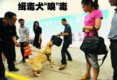 青岛海关缉毒犬:2秒钟嗅出毒贩子 喜欢玩游戏(图)