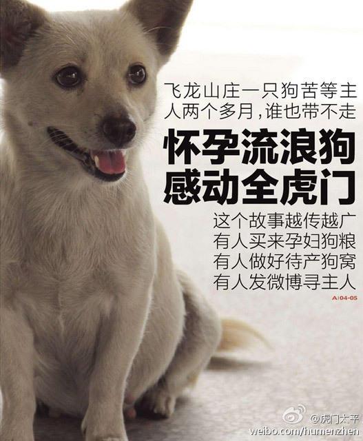 东莞怀孕狗狗被遗弃 原地等主人两个多月不愿离开