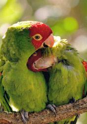 爱情鸟枝头相拥