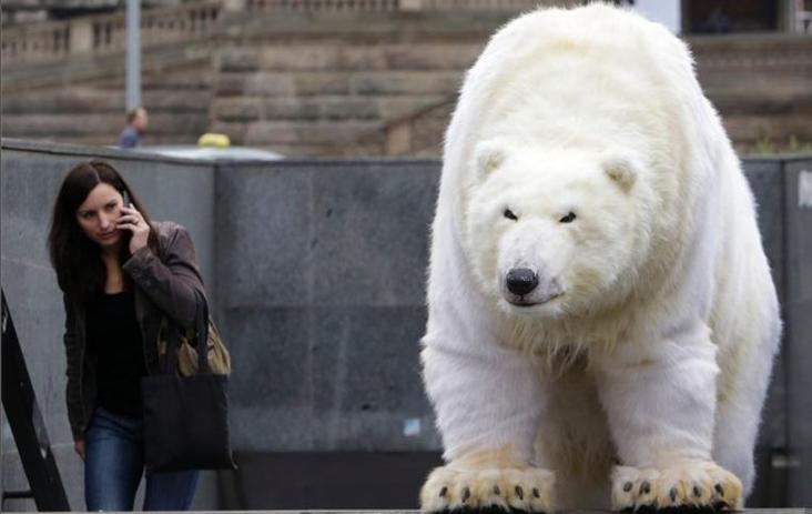 """""""北极熊""""为公益现身捷克街头"""