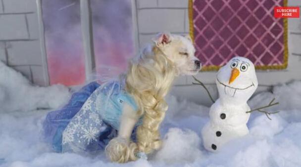 狗狗扮演迪士尼电影角色