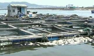 汕头网箱鱼大量死亡养殖户损失惨重
