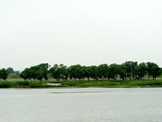 大沽河百年古槐林 最原始的自然生态风貌