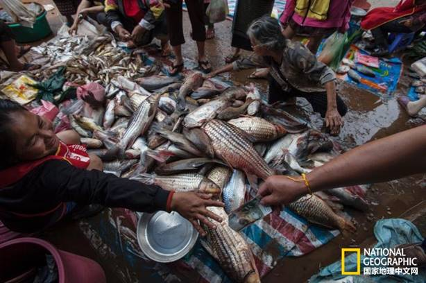 巴色是老挝人口第二多的城市,人们正在这里买鱼. 摄影:DAVID