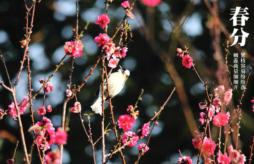 5263,阴阳相半春分也(原创) - 春风化雨 - 诗人-春风化雨的博客
