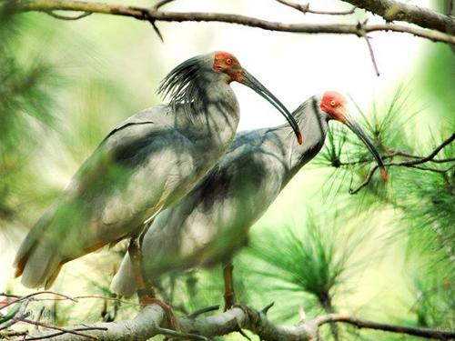 洋县朱鹮自然保护区