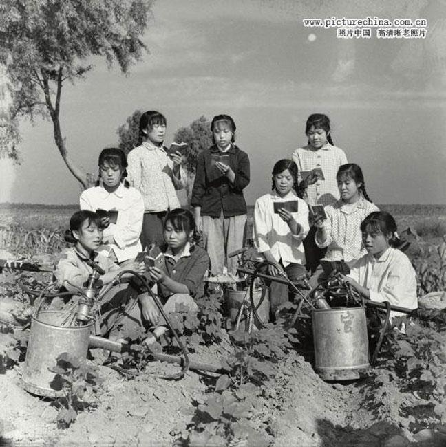 这是一组1972年的知青上山下乡宣传图。图为一群女知青在每天劳动之前,地头在学习毛主席语录的。