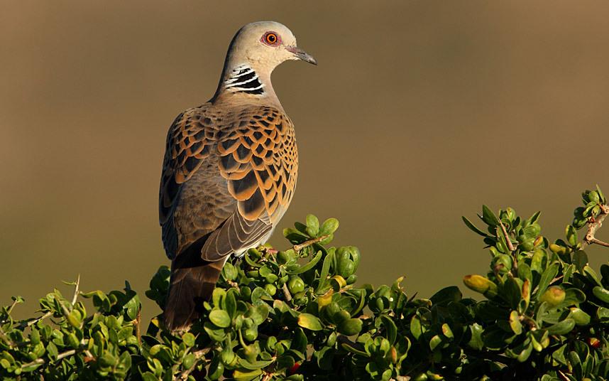 可能要灭绝的绝美动物 - 大漠胡杨 - 大漠胡杨的博客