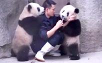 给熊猫喂药 管理员完全招架不住啊!