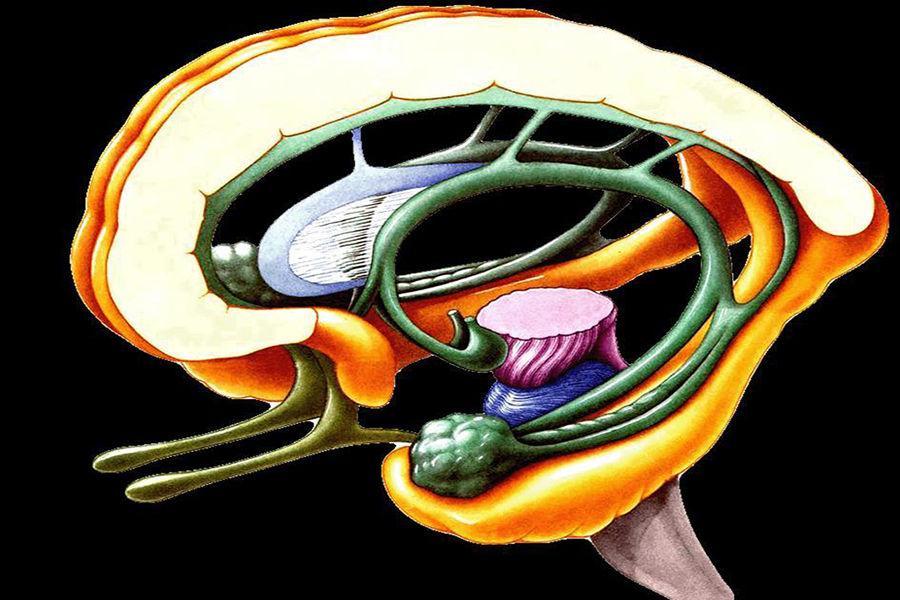 科学家通过对同性恋者的大脑解剖,发现同性恋男性的大脑与异性恋女性的大脑有相似的地方,而与异性恋男性的大脑有区别。其他的发现包括同性恋男性的手指印与异性恋女性的相类似,而一个胎儿的手指印在16周形成。这表示同性恋可能是由基因决定的。