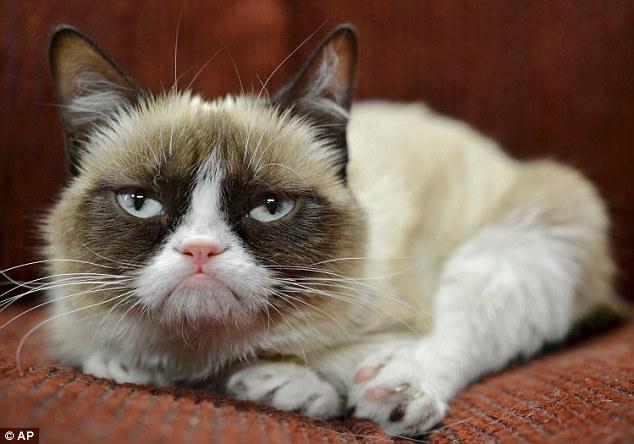 """""""不爽猫""""身价高达6亿人民币  超过多位好莱坞影星 - 仙人掌 - 仙人掌"""