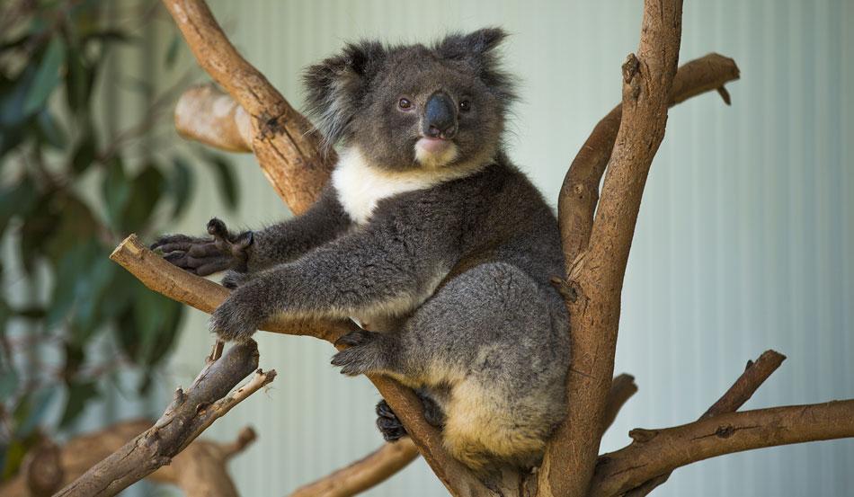 南澳美丽行 呆萌动物惹人爱