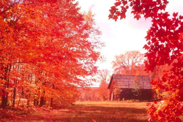 秋天汽车风景图片