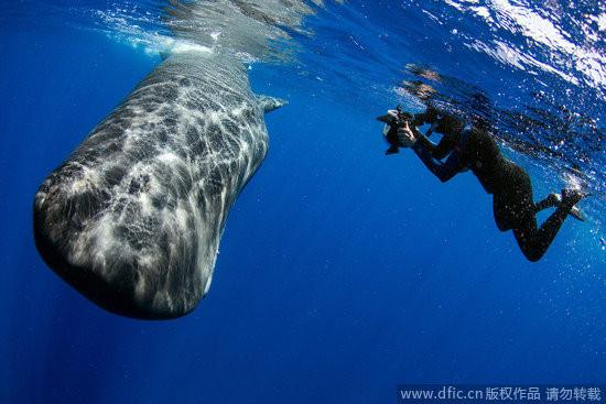壁纸 动物 海洋动物 鲸鱼 桌面 550_367