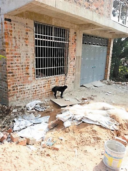 广西65岁独居老人在家猝死 尸体遭家中2条狗分食