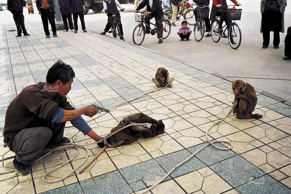 11月3日,成都清江路,找到一片没有警察和城管的区域,杨林贵摆开场子