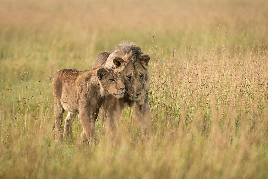 野生动物的浪漫情怀 - 雷石梦 - 雷石梦(观新闻)