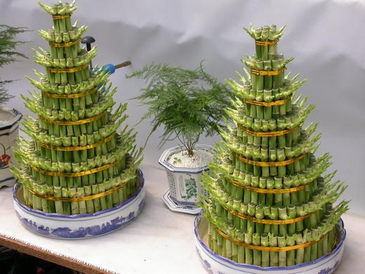 最管用的五种旺财植物