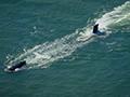 实拍中国潜艇遭美军P-8A跟踪 被迫紧急下潜